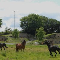 Visite des troglogites de Bretagne