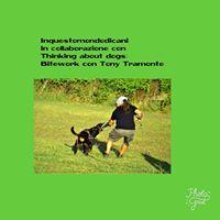 Bitework gioco di predazione e gioco socialecon Tony Tramonte
