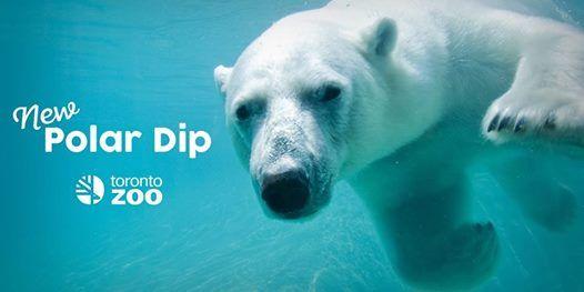 Toronto Zoos Polar Dip