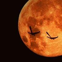 Embodiment Tribe - Samhain Prayers Oct 29th