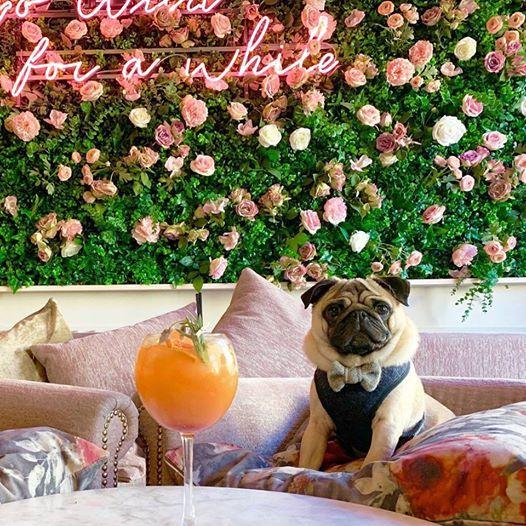 Pug Cafe Bristol at The Florist