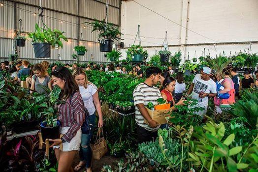 Sydney - Huge Indoor Plant Warehouse Sale - Summertime Madness