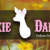 Yellow Daisy Festival