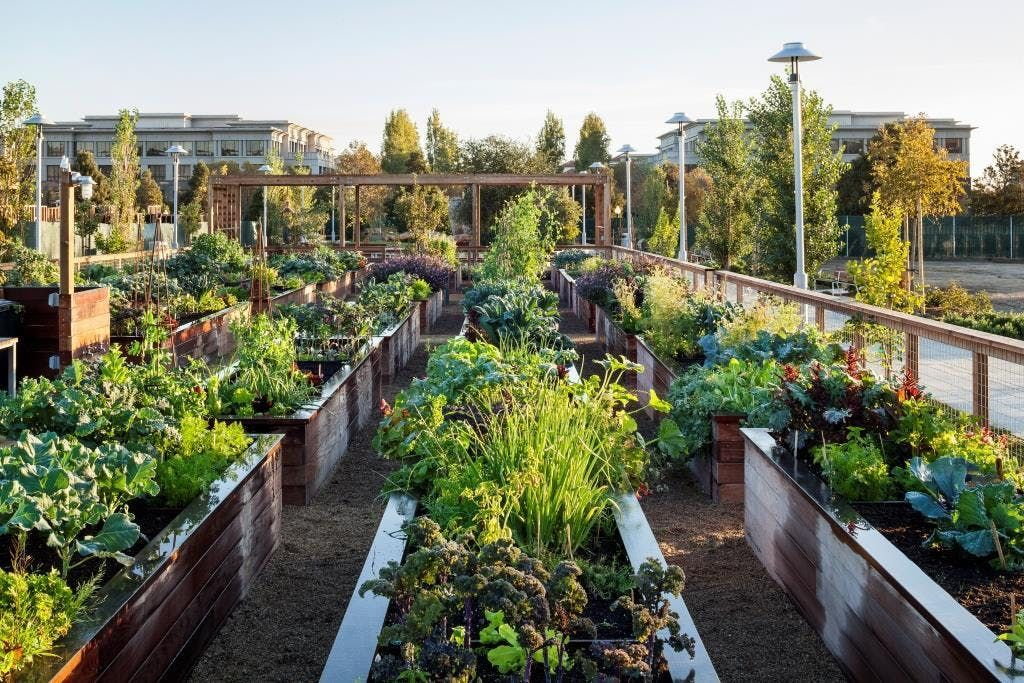 Growing Food 101 Getting Your Garden Started