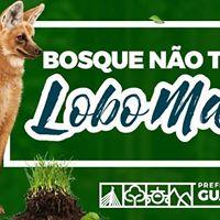 Atividade de Frias - Bosque no tem Lobo Mau (2607)