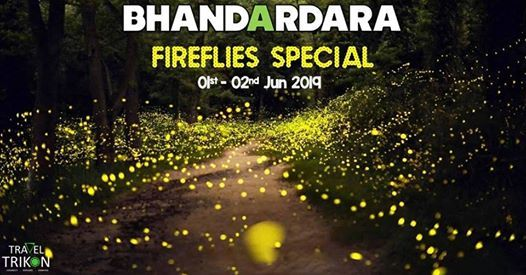 Fireflies Special Camping