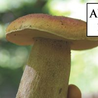 Hunting Wild Mushrooms