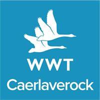 WWT Caerlaverock