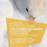 Les Cygnes sauvages - Musique entre les lignes