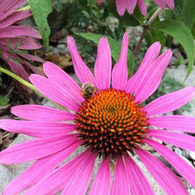 Plants & Permaculture wRhonda Baird
