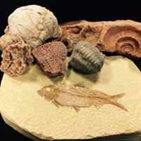 Introduction to Fossil Identification