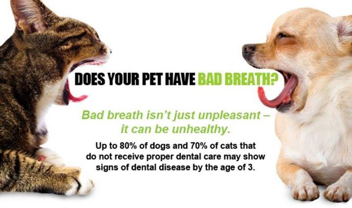 Sedation Free Pet Teeth Cleaning