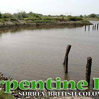 Serpentine Fen &amp the artful interpretation of wetland plants
