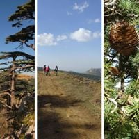 NEW The Cedars of Tannourine  Guided Hike with Lunch