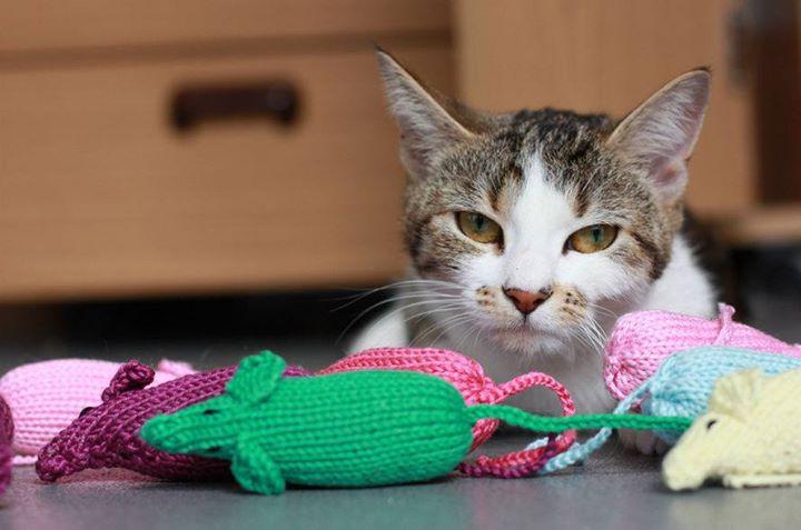 Knitting Kittens