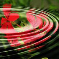 enski krog odkrivajte svojo pravo naravo