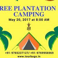 Tree Plantation and Camping