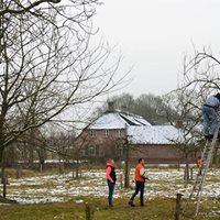 Cursus verzorgen en snoeien van fruitbomen