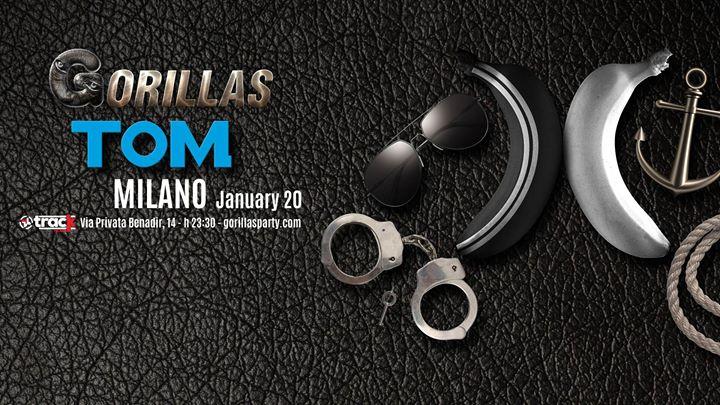 Gorillas Tom - Milano