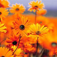 Primavera con le Classi di Esercizi Bioenergetici