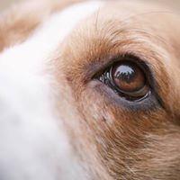 Curso de educacin y obediencia para perros de compaa