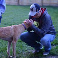 Portage Petco Meet &amp Greet with American Greyhound