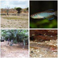Reisebericht Tansania