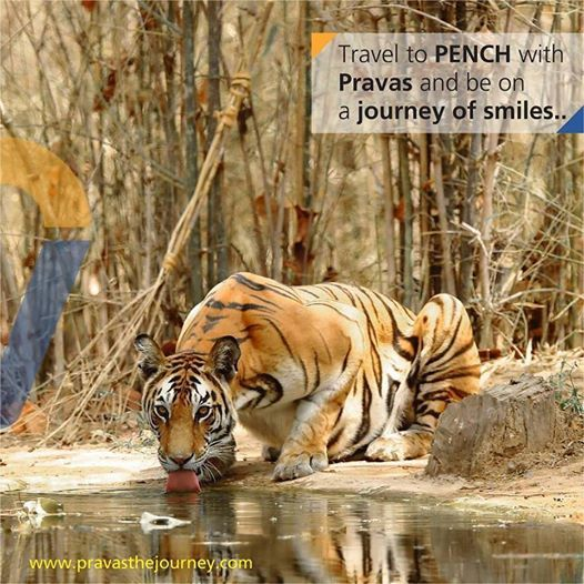 Travel to Pench National Park with Pravas The Journey