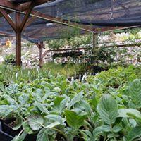 Nursery &amp Habitat Stewardship