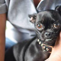 ShyFearful Dogs Workshop