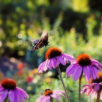 Seminar - Mid-Summer Garden Spruce Up
