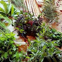 Introduction to Herbal Medicine for Beginners