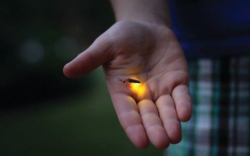 Sold Out Evening Bug Hunt  Best for Ages 6-11