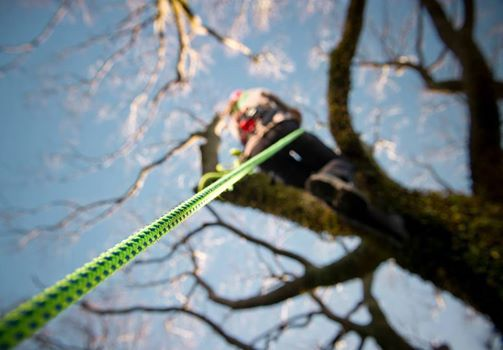 Chainsaw Course - Taupo