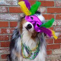 Shelby County Puppy Parade