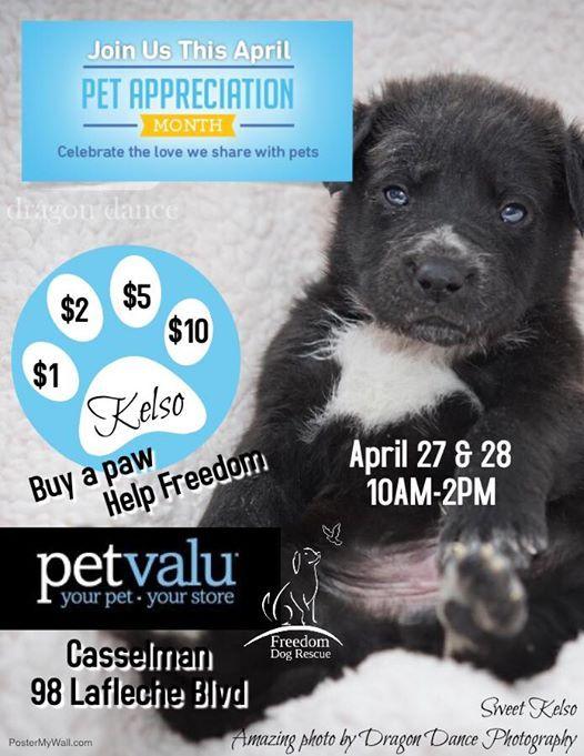 Freedom Dog Rescue at Pet Valu Casselman