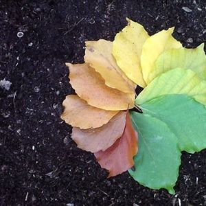 Autumn Colours Walk