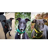 Pets at Home - Stratford Upon Avon