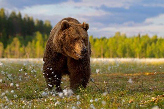 Finnland  Wildnis im Land der tausend Seen