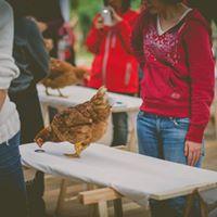 Chicken Camp Nivel 1 - Discriminacin