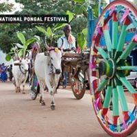 International Pongal Festival