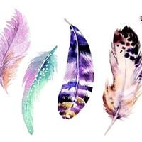 Flight of the Feather shamanic feather healing and journeying