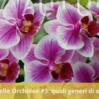 Officina delle Orchidee 3  quali generi di orchidee