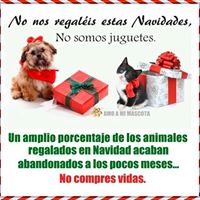 Concentracin NO Compres Adopta.