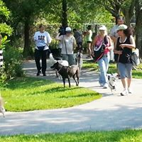 Pack Walk in the Park (July 2017)