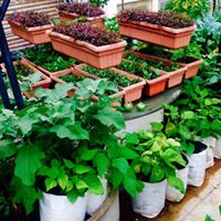 Organic Terrace Gardening Workshop