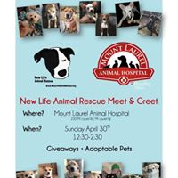 New Life Animal Rescue Meet &amp Greet at Mt Laurel Animal Hospital