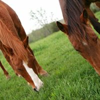 Southern States - Manassas VA - Equine Ulcer &amp Digestive Health