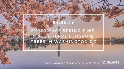 Cherry Blossom trees in Washington DC on April 6 2019.