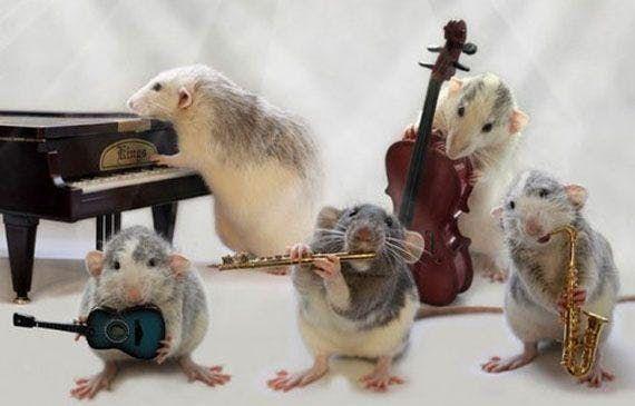 Rat Band